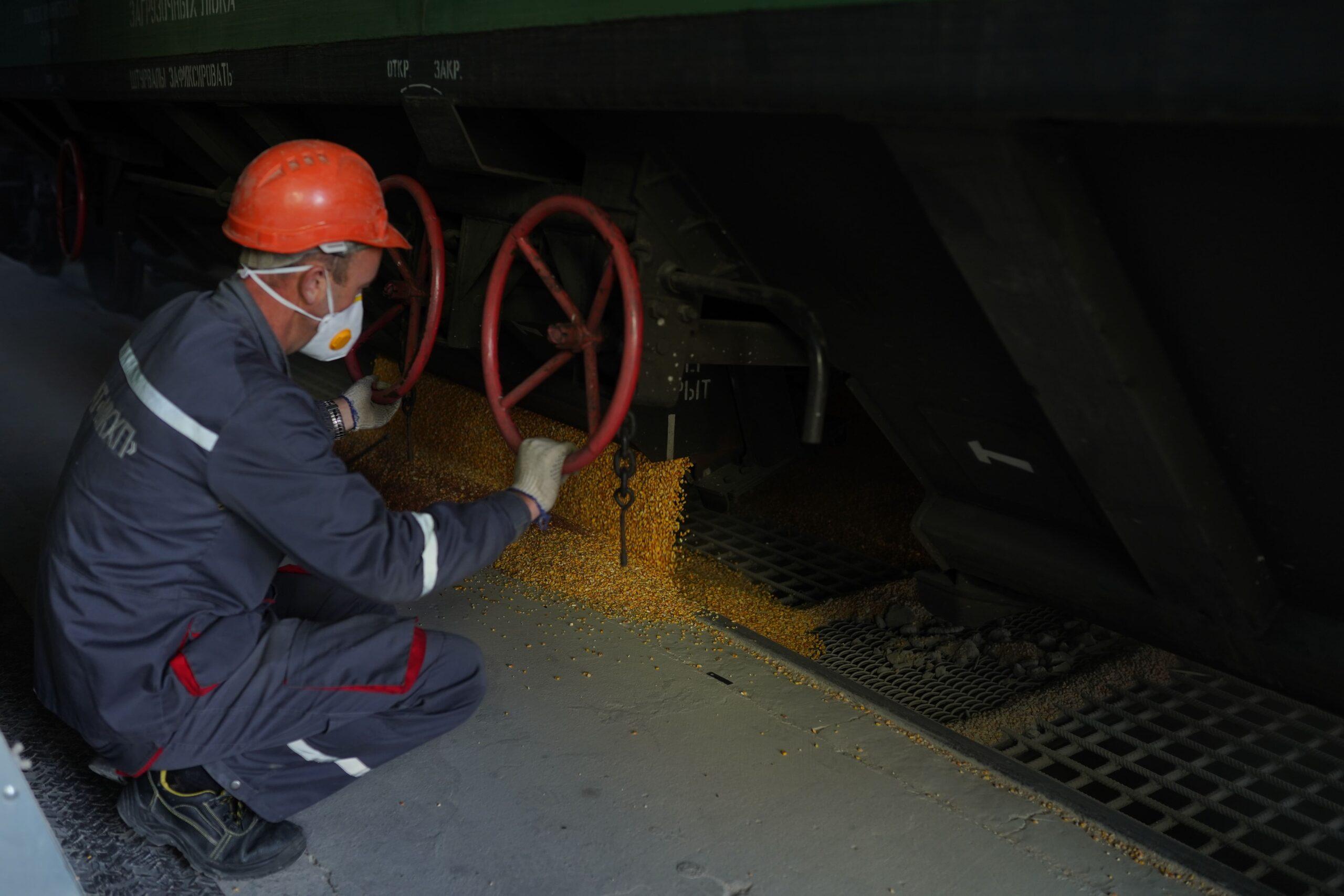 отгрузка зерна с вагонов